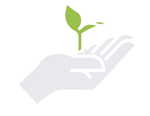 Image of Hand Holding Plant